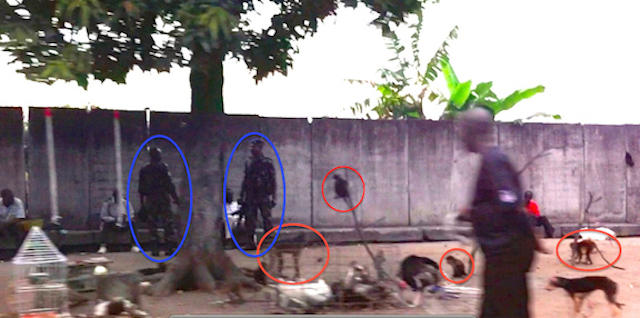 The red circles show monkeys and the blue ovals are around soldiers that protect the middlemen.