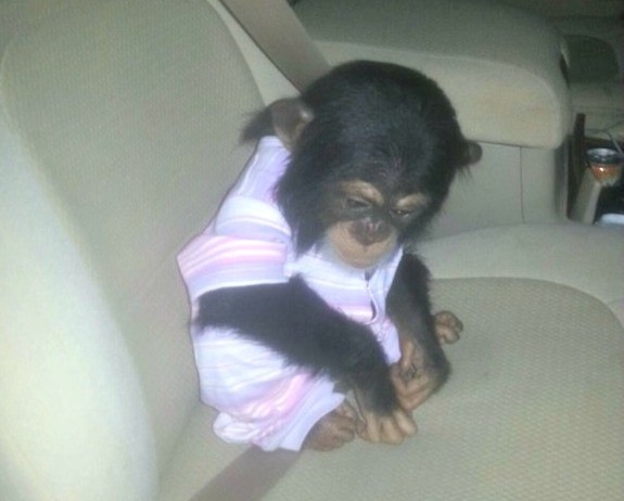 1Qatar seized chimp
